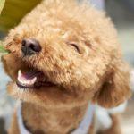 犬が死んだら横浜市注目情報。犬が死んだら横浜市の事なら、このページへどうぞ!