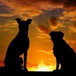ペット火葬・横浜中区関連の重要サイト。ペット火葬・横浜中区お役立ち情報はこれ!